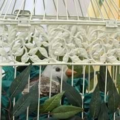 Baby Shower - Sage Green, Lemon & White (Bird Cage) -  Sage Green, Lemon & White (Bird Cage)