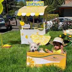 Fresh Lemonade Neighborhood Party - Lemonade Stand