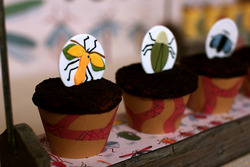 Insect_bug_dessert_table_birthday_dirt_cupcakes_2_medium